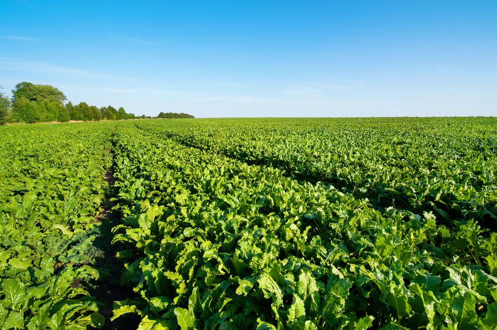 Foto de Nutrición de cultivos  y praderas a tu medida