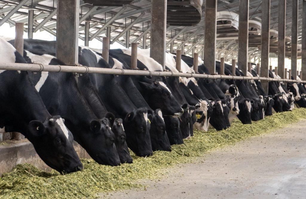 Línea Liquid Feed para bovinos