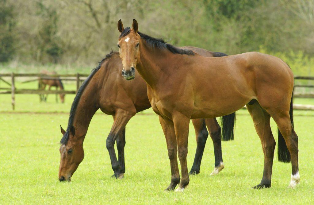 Línea Optimix para equinos