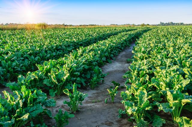 Contrato agrícola