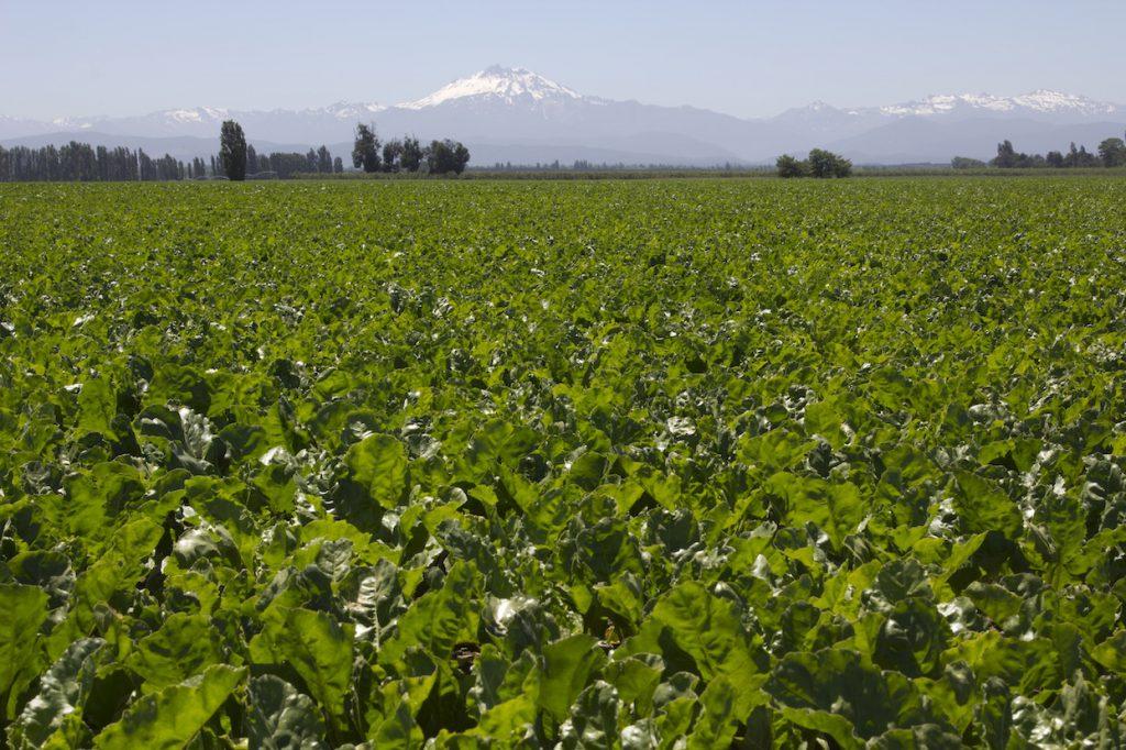 Desarrollo agrícola