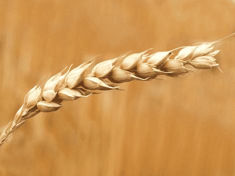 ¿Qué es la Alulosa y de dónde proviene?